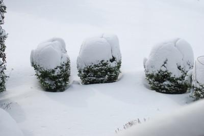 Snow-DSC_0186